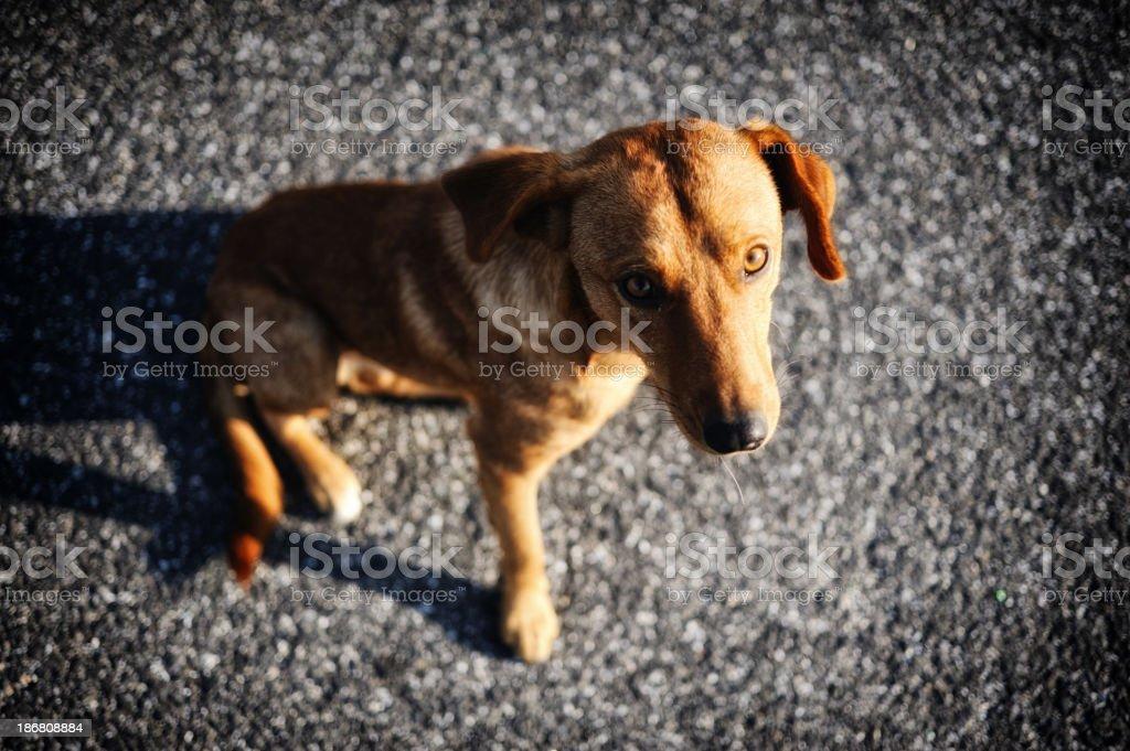 Stray dog on the road stock photo