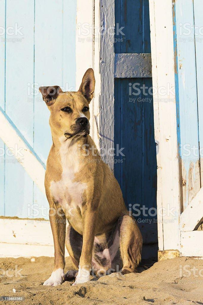 Stray dog on the sand royalty-free stock photo