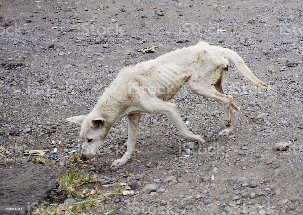 stray dog stock photo
