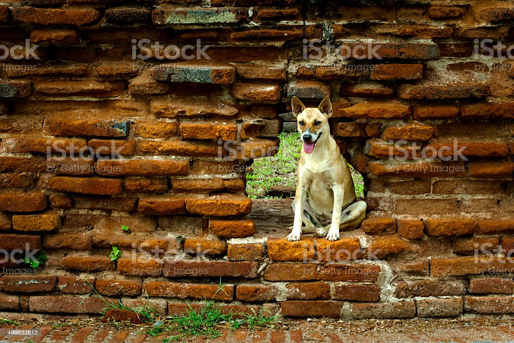 Stray dog royalty-free stock photo
