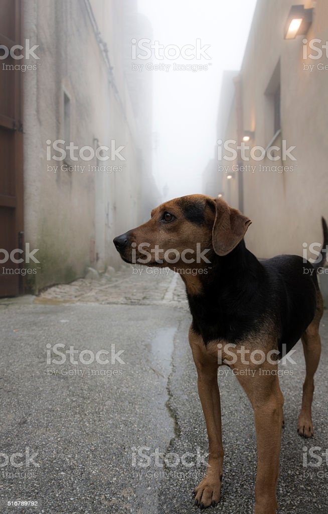 Stray Dog stock photo