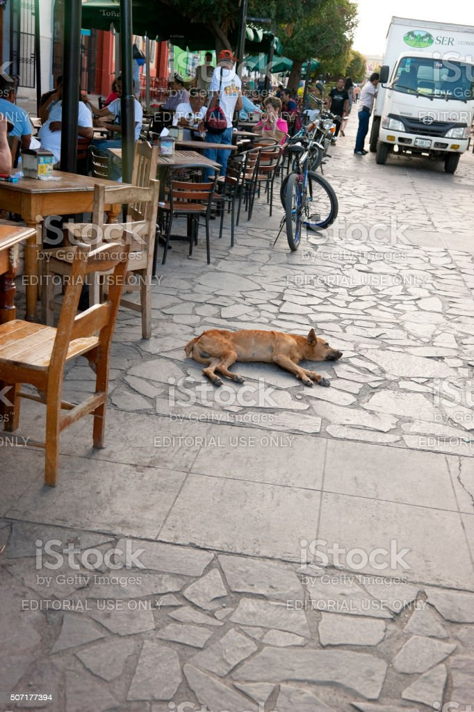 Stray dog resting in the middle of busy street stock photo