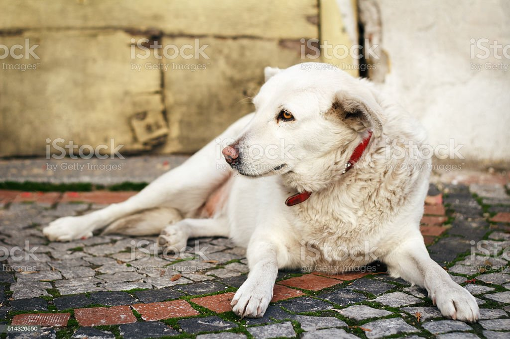 Stray dog ​​resting stock photo