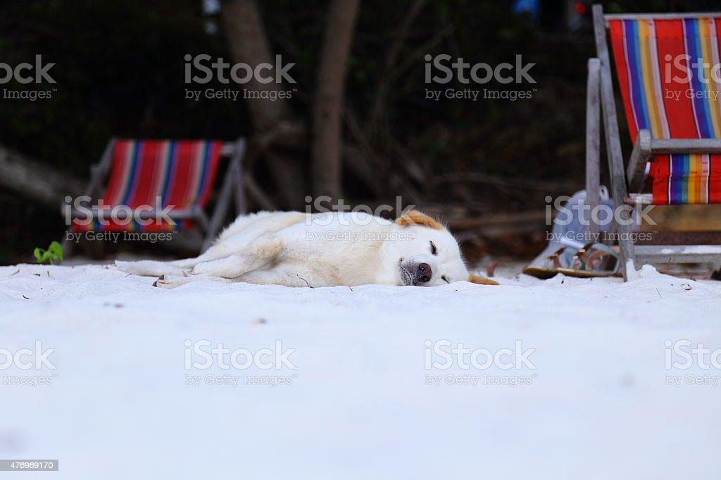 Doge sleep on white sand beach at Samet Island. He seem very happy.