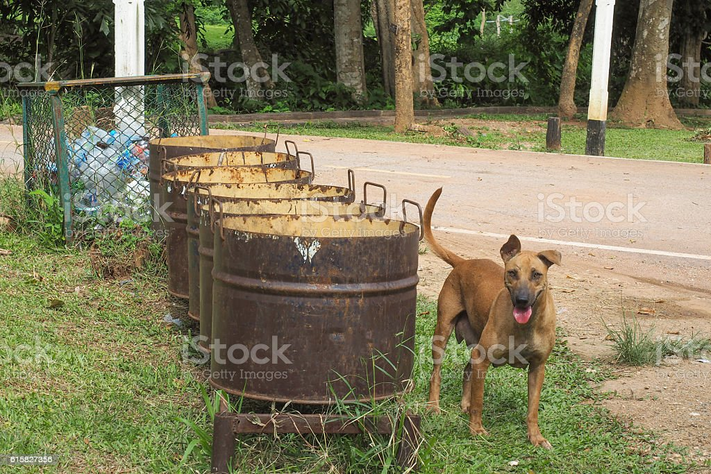 Stray dog  standing near the trash stock photo