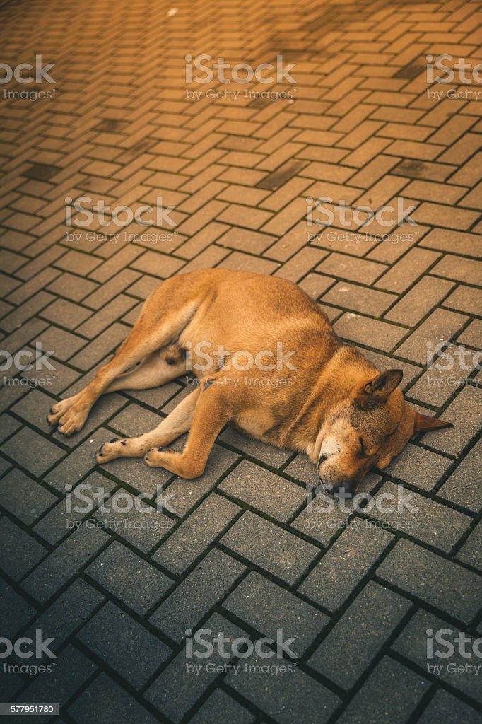 Stray dog takes a nap on the sidewalk royalty-free stock photo