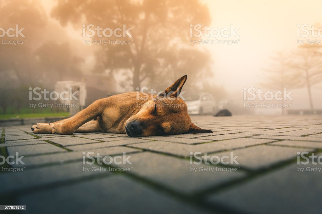 Stray dog takes a nap on the sidewalk royalty-free stock photo