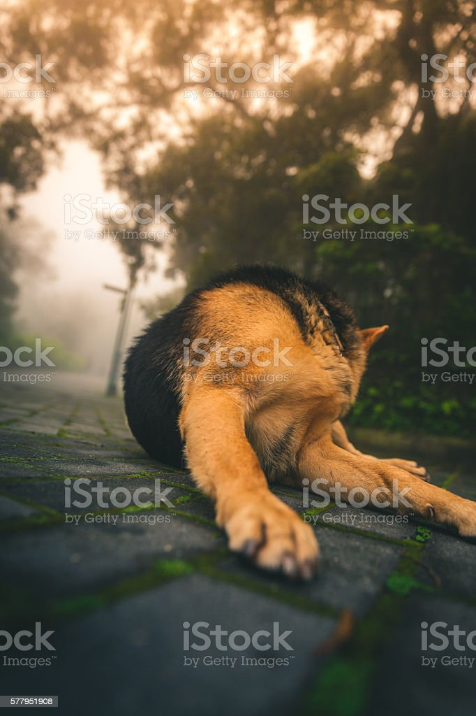 Stray dog wakes up from a nap on the sidewalk royalty-free stock photo