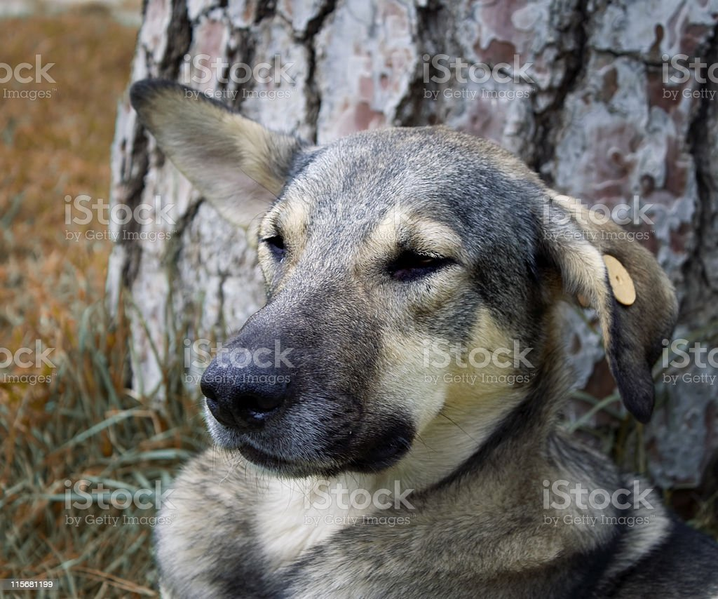 stray dogs living on the streets royalty-free stock photo
