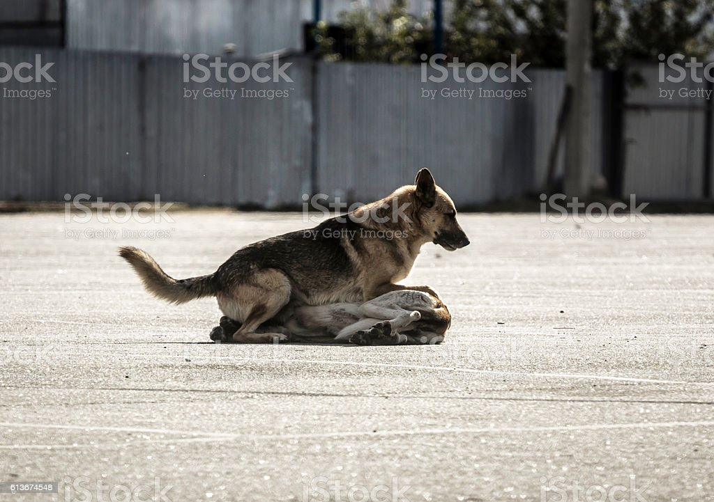 stray dogs on the floor outside. one is  the other stock photo