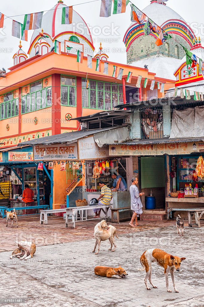Stray dogs outside Hindu temple at Kalighat, Kolkata, India. stock photo