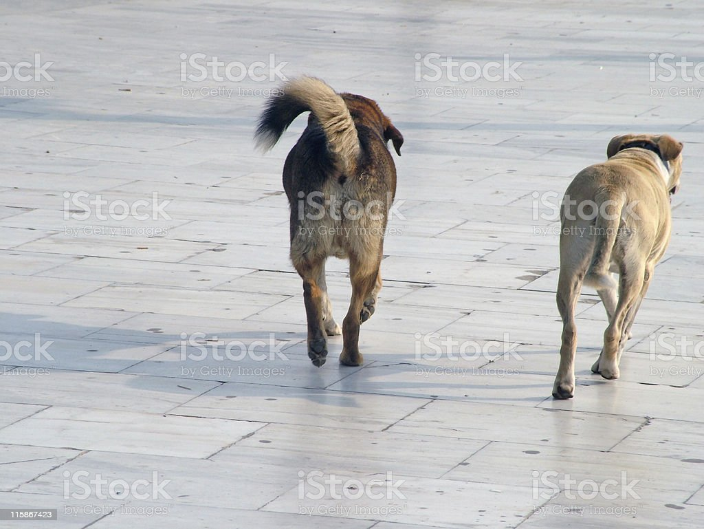 Stray dogs royalty-free stock photo