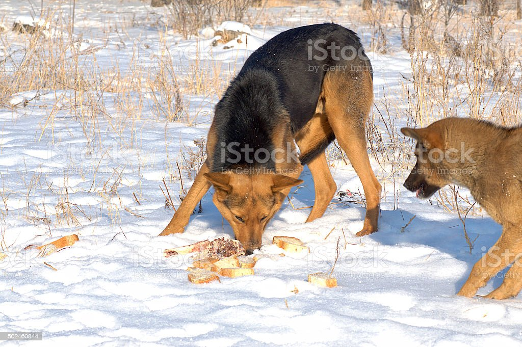 Stray dogs stock photo