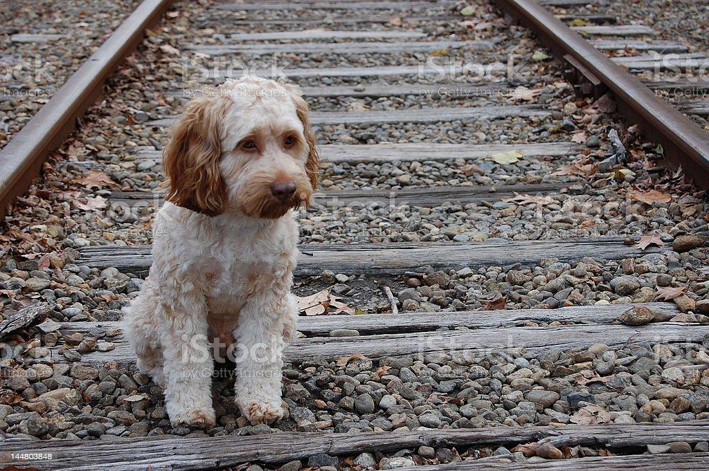 stray puppy stock photo