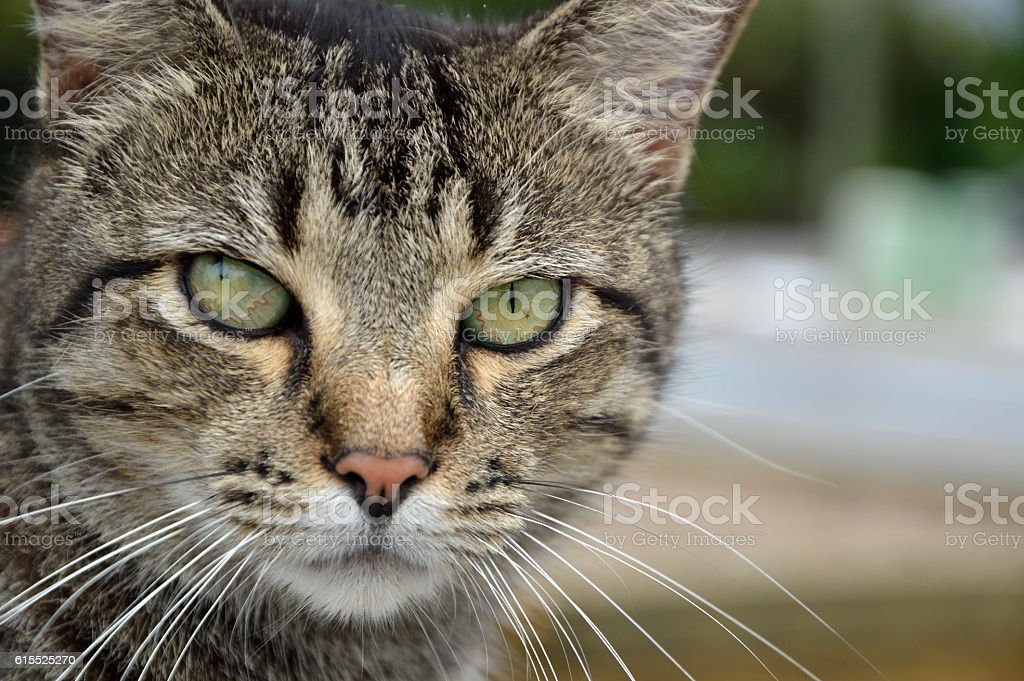 Stray Tabby Cat on Dock stock photo