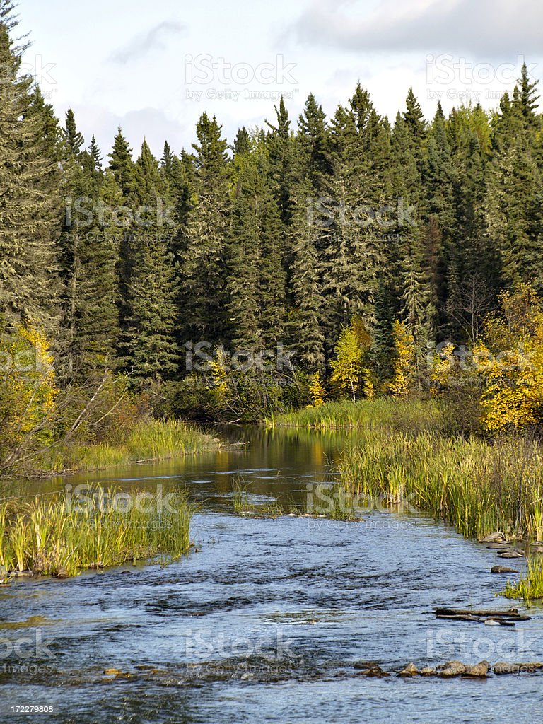 Stream and Forest stock photo