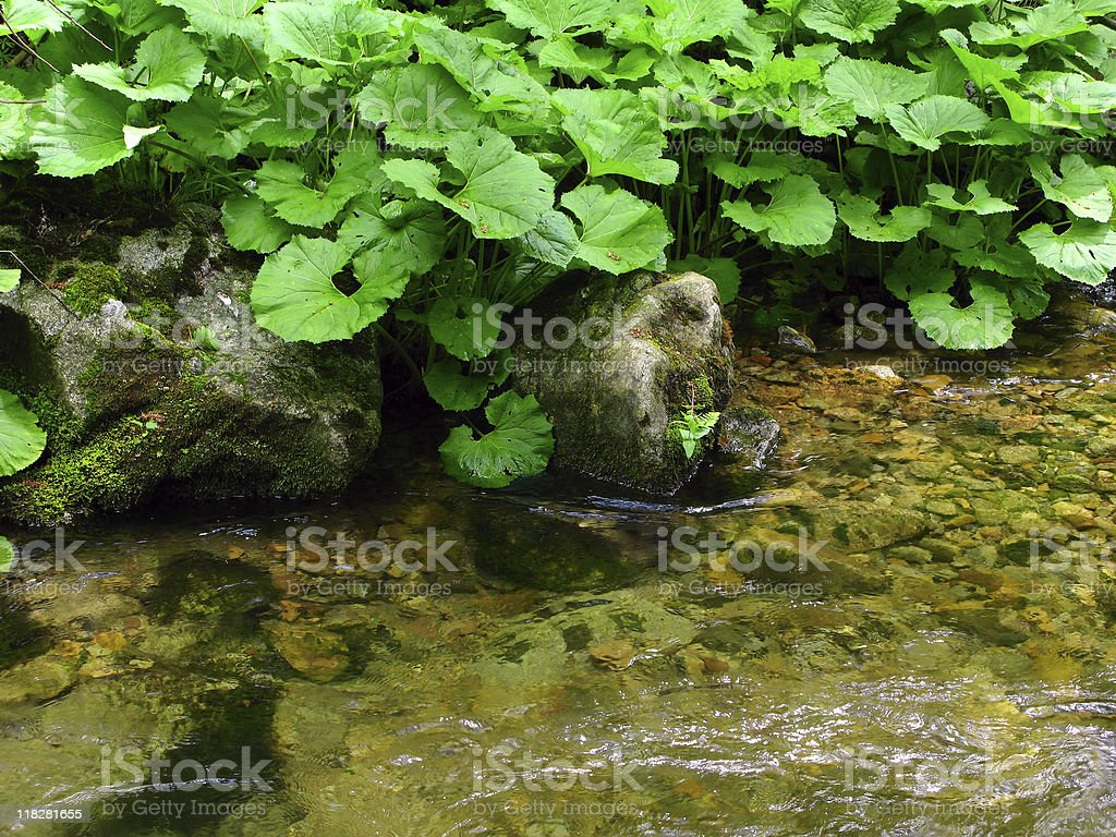 stream bank stock photo