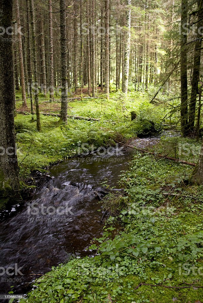 stream flowing through forest royalty-free stock photo