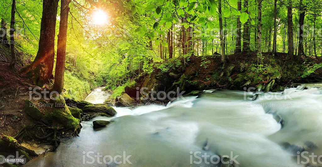 Stream Flowing Through the Woods royalty-free stock photo
