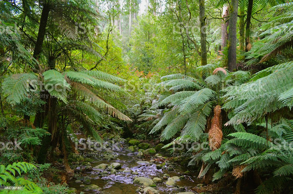 Stream in a Rain Forest stock photo