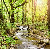 Stream in forest in Slovak Karst mountains