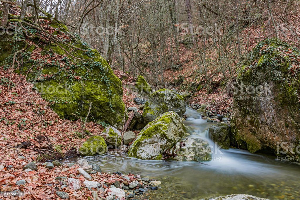 Stream in forest stock photo