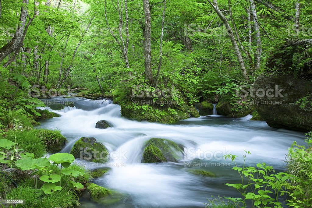 Stream in green forest royalty-free stock photo