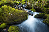 Stream in old forest, blurred water in fast motion
