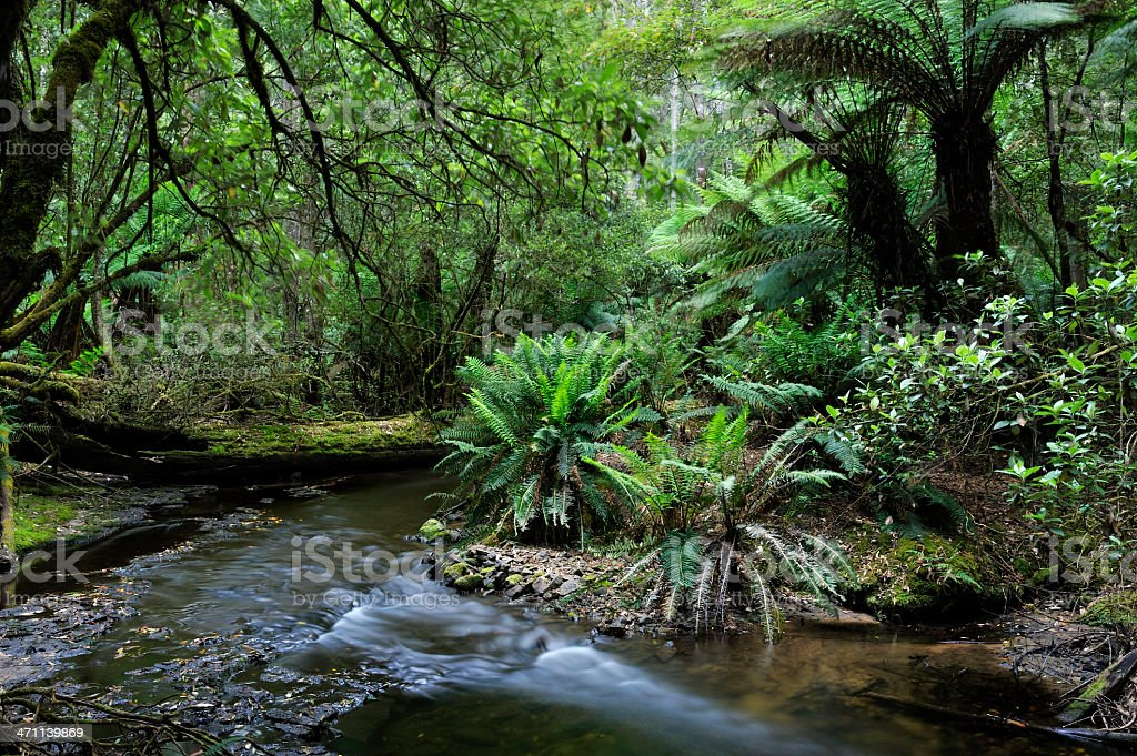 stream in rainforests stock photo