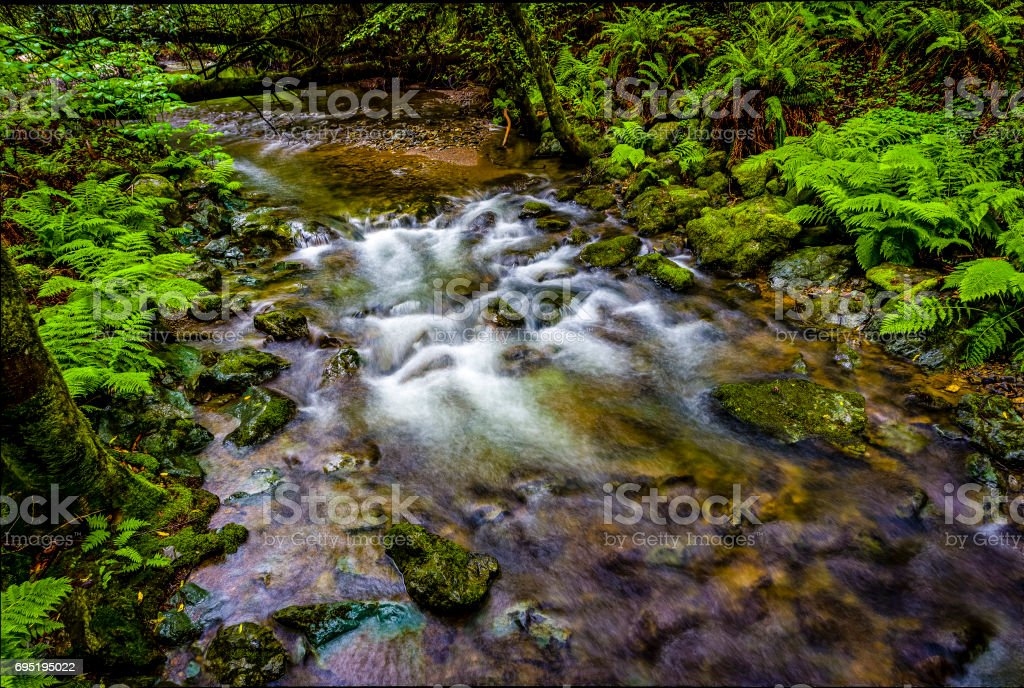 Stream in Redwood in Muir Woods National Monument stock photo