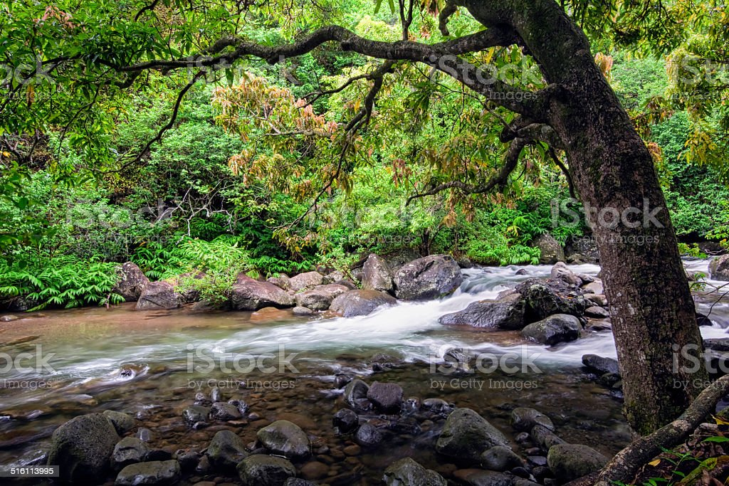Stream in the Iao Valley State Park, Maui, Hawaii stock photo
