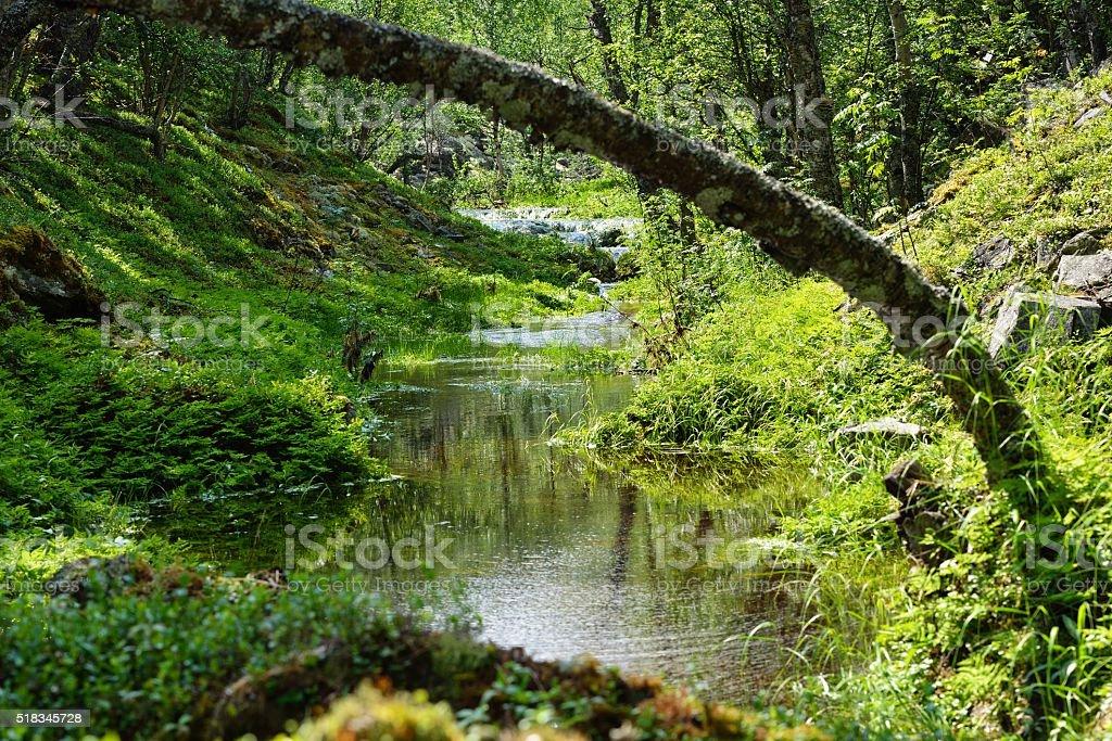 stream in the Jotunheimen park stock photo