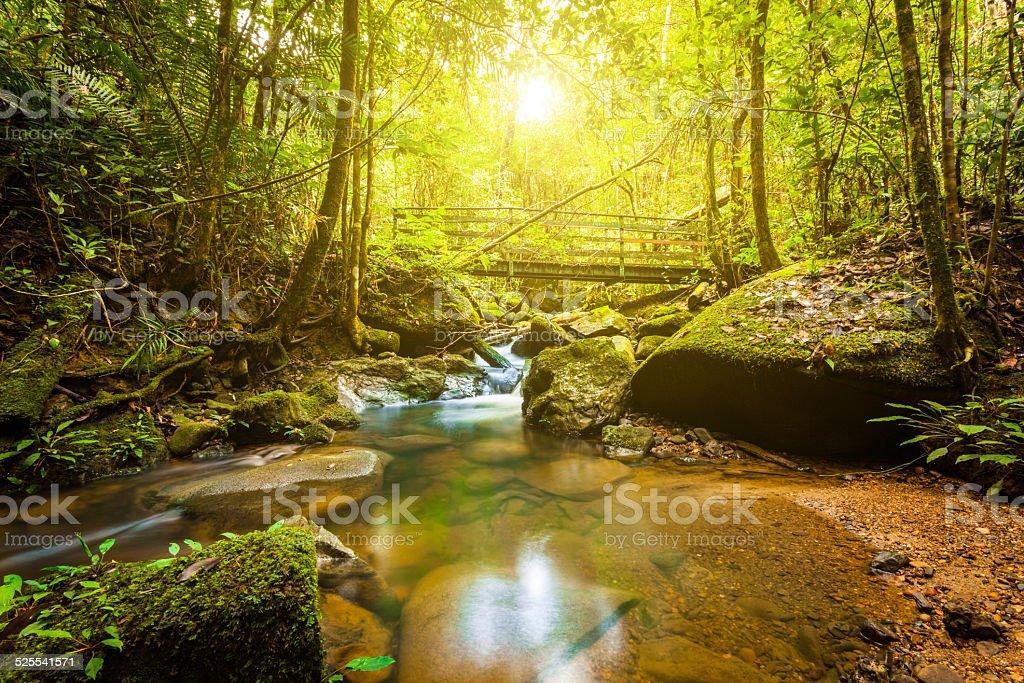 Stream in the Jungle at Sunrise stock photo