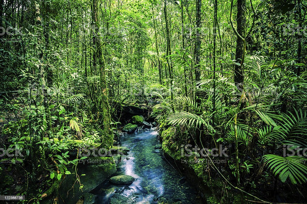Stream in the Jungle stock photo