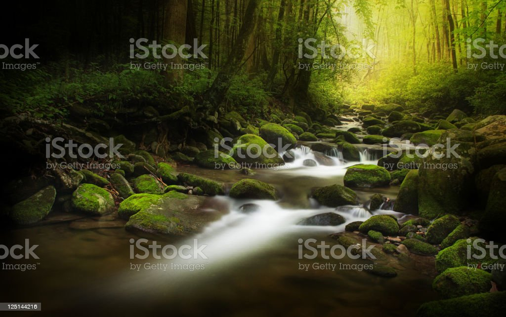 Stream in the middle of the deep dark wood stock photo