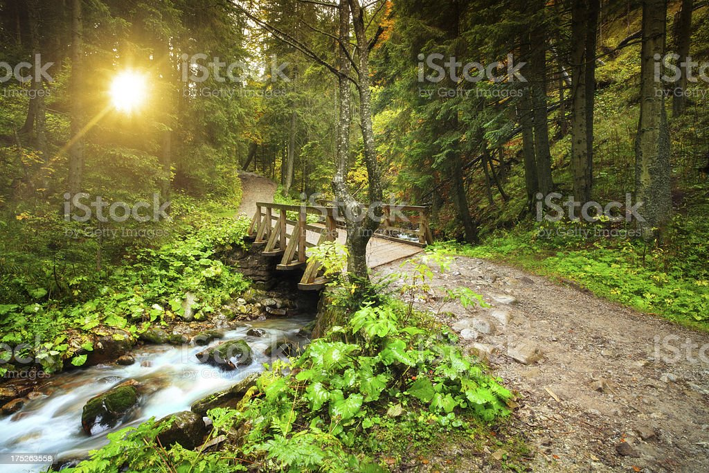 Stream in the Mountain Forest during Sunset - Motion Blur stock photo