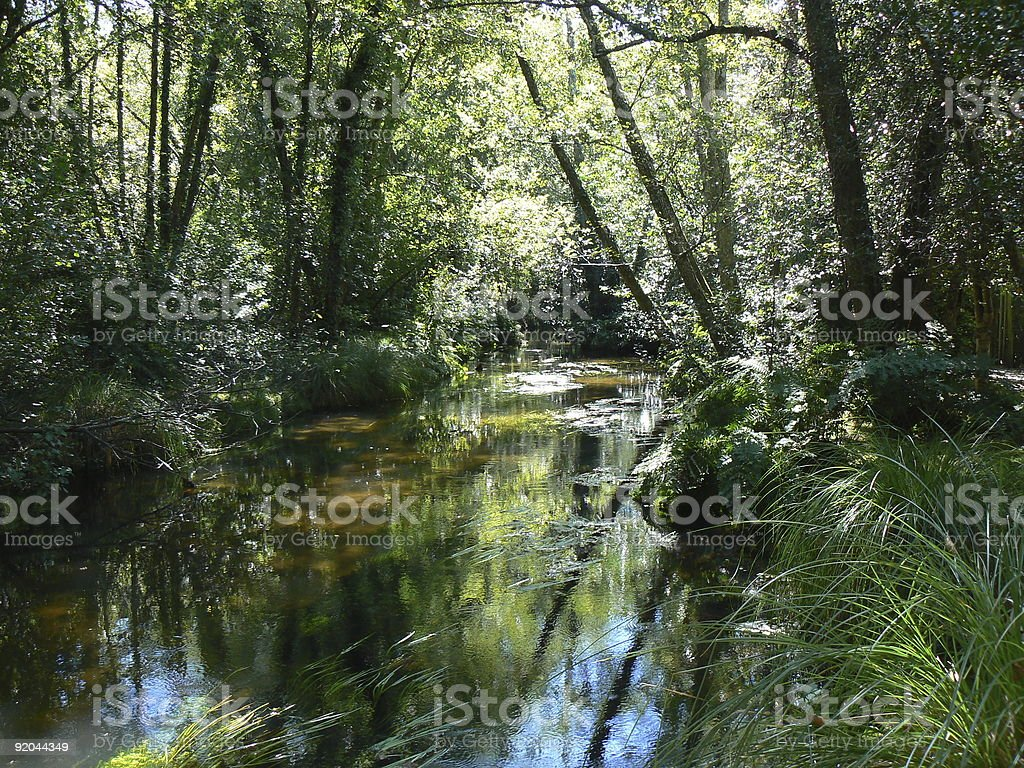Stream in the sun royalty-free stock photo