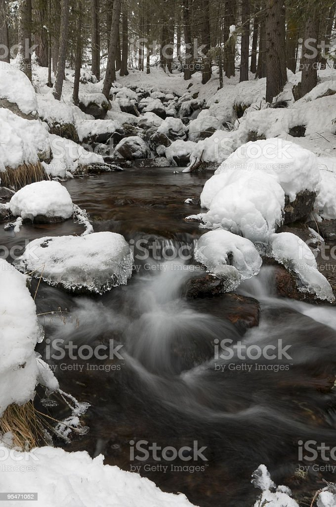 Stream in the woods royalty-free stock photo