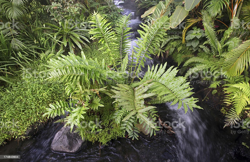 Stream in Tropical Rain Forest stock photo