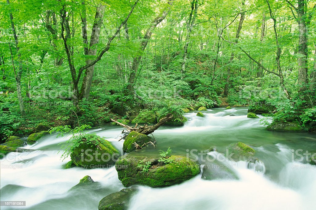 Stream in woodland royalty-free stock photo