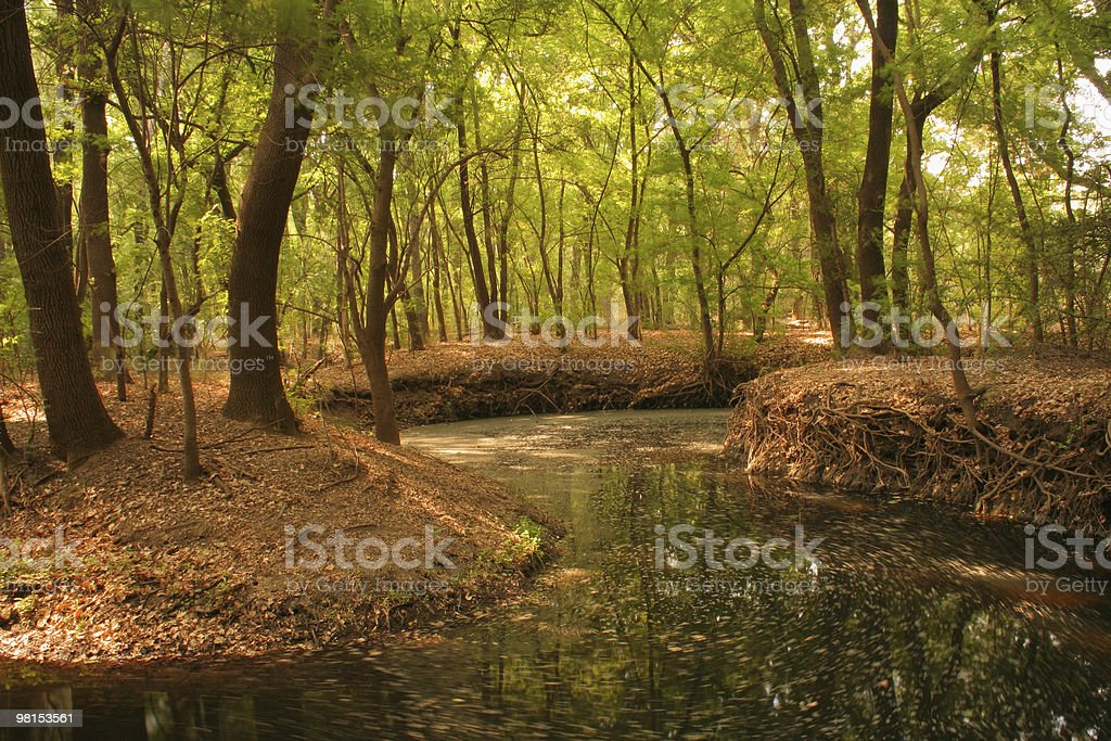 Stream meandering through a forest of green trees royalty-free stock photo
