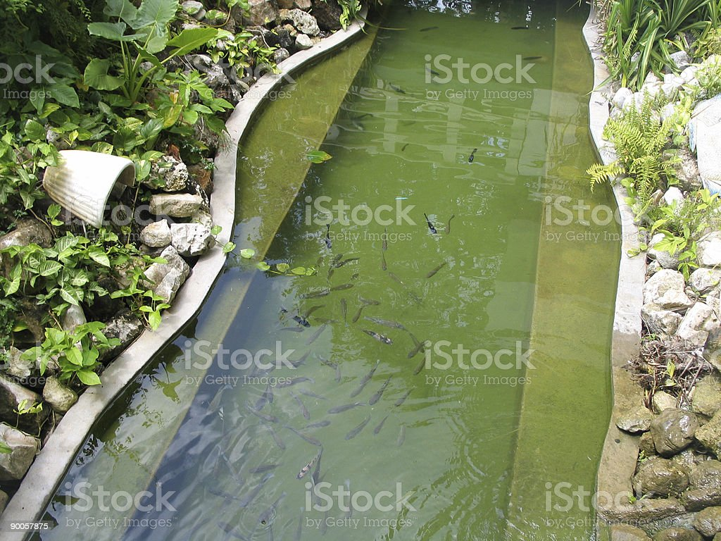 Stream of Fish royalty-free stock photo