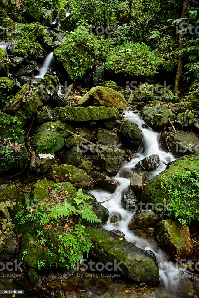 Stream running through fern and moss covered rocks stock photo