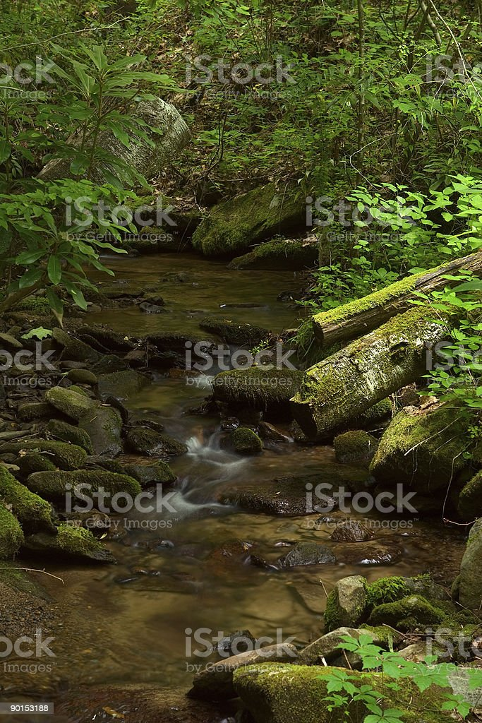 Stream Smoky Mountains National Park royalty-free stock photo