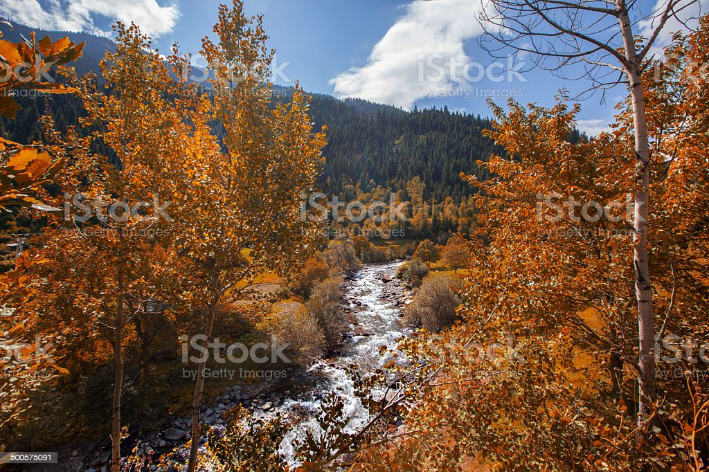 stream spring stock photo