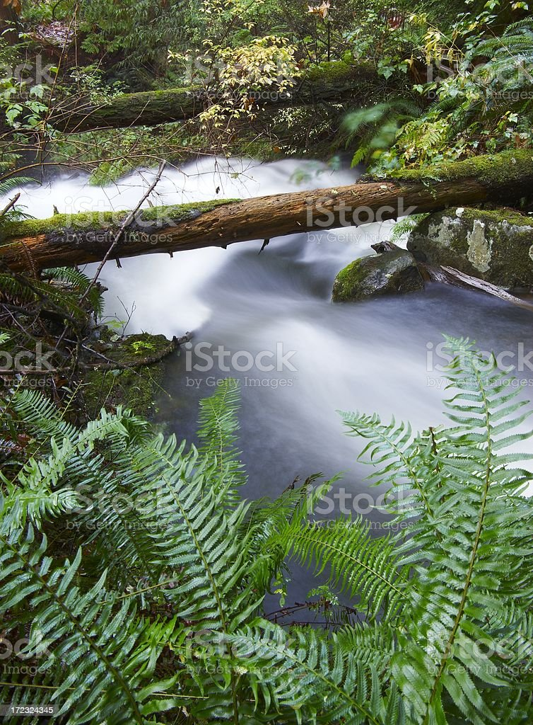 Stream with fallen branches stock photo