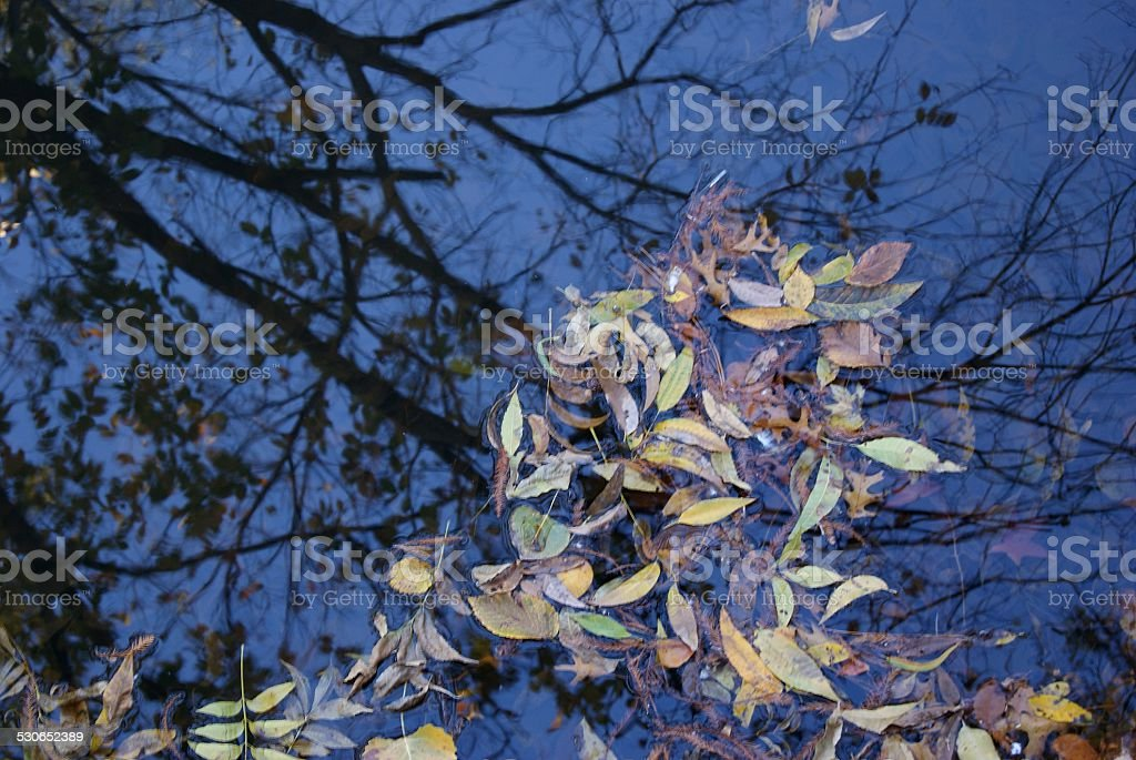 Streamed Leaves royalty-free stock photo