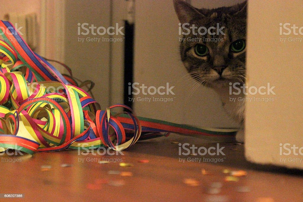 Streamers and confetti on the floor with cat stock photo