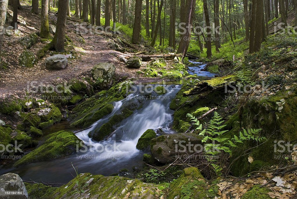 Streaming Green royalty-free stock photo