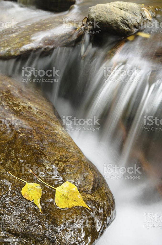 streaming water between rocks with autumn leaves stock photo